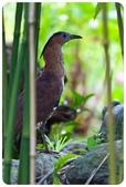 20110821_大安森林公園之什麼都有:Canon EOS 5D Mark II-20110821-0731-8.jpg
