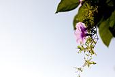 20110724_50D+Zeiss Contax 85 1.4:Canon EOS 50D-20110724-0751-8.jpg