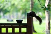 20110821_大安森林公園之松鼠過馬路:Canon EOS 5D Mark II-20110821-0742-17.jpg