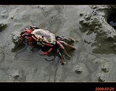 20090725_高美濕地&伸港一日遊:nEO_IMG_IMG_4760.jpg