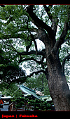 20101010_日本˙福岡行_Day 5:20101010-0758-11.jpg