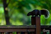 20110821_大安森林公園之松鼠過馬路:Canon EOS 5D Mark II-20110821-0742-18.jpg