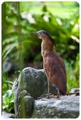20110821_大安森林公園之什麼都有:Canon EOS 5D Mark II-20110821-0732-9.jpg