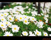 20100123~24_清境/合歡山-二日遊:nEO_IMG_IMG_6500.jpg