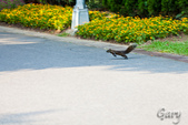 20110821_大安森林公園之松鼠過馬路:Canon EOS 5D Mark II-20110821-0742-19.jpg
