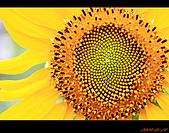 20090524_桃園_向陽農場:nEO_IMG_IMG_4020.jpg