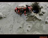 20090725_高美濕地&伸港一日遊:nEO_IMG_IMG_4752.jpg