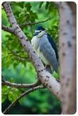 20110821_大安森林公園之什麼都有:Canon EOS 5D Mark II-20110821-0720-1.jpg