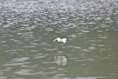 20110821_下雨天的大湖:Canon EOS 50D-20110821-1536-3.jpg