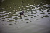 20120331_Steinheil Braun Reflex 50 F1.9_大湖:20120331-1020-21.jpg