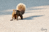 20110821_大安森林公園之松鼠過馬路:Canon EOS 5D Mark II-20110821-0743-21.jpg