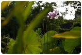 20110821_大安森林公園之什麼都有:Canon EOS 5D Mark II-20110821-0735-11.jpg