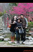 20100123~24_清境/合歡山-二日遊:nEO_IMG_P1010660.jpg