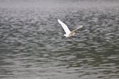20110821_下雨天的大湖:Canon EOS 50D-20110821-1537-5.jpg