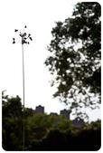 20110821_大安森林公園之什麼都有:Canon EOS 5D Mark II-20110821-0736-12.jpg