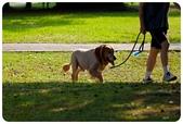 20110821_大安森林公園之什麼都有:Canon EOS 5D Mark II-20110821-0755-28.jpg