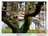 Xuite活動投稿相簿:福壽山一遊