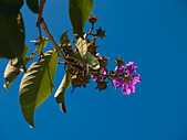 20110723_Olympus E510:E-510-20110723-1001-9.jpg