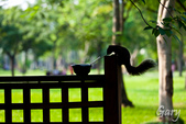 20110821_大安森林公園之松鼠過馬路:Canon EOS 5D Mark II-20110821-0743-24.jpg