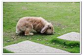 20100619_八里_兔子餐廳&海岸公園:nEO_IMG_IMG_0308.jpg