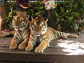 泰國蜜月之旅:泰國 188.jpg