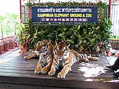 泰國蜜月之旅:泰國 140.jpg