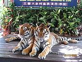 泰國蜜月之旅:泰國 141.jpg