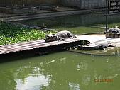 泰國蜜月之旅:泰國 146.jpg