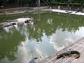 泰國蜜月之旅:泰國 149.jpg
