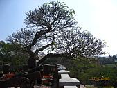 980207~980208台南古蹟之旅:照片 050.jpg