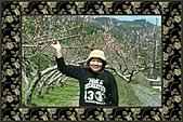 竹東部落賞花之旅:980208竹東部落賞花行 019.jpg