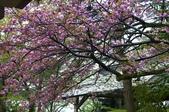 日本長野~神之故鄉.上高地:高岡古城公園