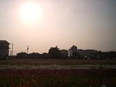 2008.12.13 橋頭鄉花田喜事:CAM_3099.JPG