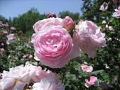 2009.5.10 Descanso Garden:1941545916.jpg