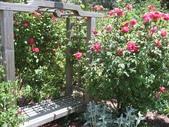 2009.5.10 Descanso Garden:1941545917.jpg