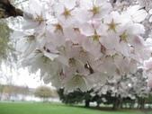 2009.4.12 Green Lake & University of Washingto:1284403193.jpg