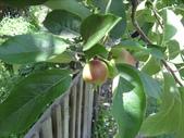 2009.5.10 Descanso Garden:1941545920.jpg