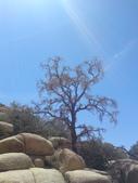 2009.06.20-21 Joshua Tree National Park:1261257561.jpg