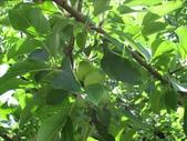 2009.5.10 Descanso Garden:1941545921.jpg