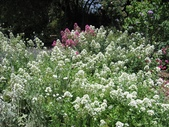 2009.5.10 Descanso Garden:1941545923.jpg