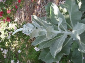 2009.5.10 Descanso Garden:1941545924.jpg