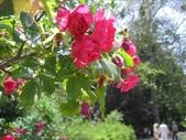 2009.5.10 Descanso Garden:1941545911.jpg