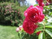 2009.5.10 Descanso Garden:1941545912.jpg