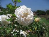 2009.5.10 Descanso Garden:1941545913.jpg