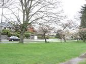 2009.4.12 Green Lake & University of Washingto:1284403189.jpg