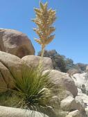 2009.06.20-21 Joshua Tree National Park:1261257557.jpg