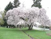 2009.4.12 Green Lake & University of Washingto:1284403190.jpg