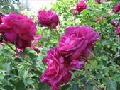 2009.5.10 Descanso Garden:1941545915.jpg