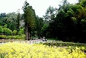 杉林溪森林遊樂區:02杉林溪.JPG