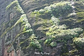 龍虎山景區-仙水岩:1080412216.JPG